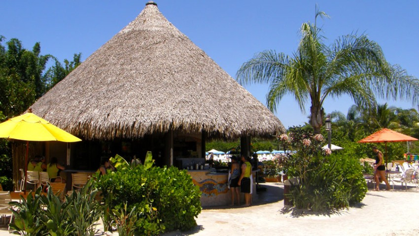 Discovery-Cove-Bar