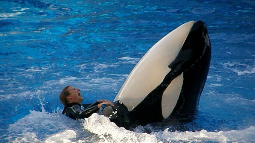 Sea-World-Orca